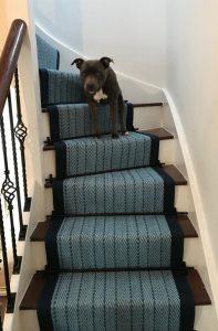 Herringbone blue black rods Cute dog!