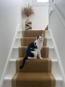 Sisal-gold-Beige-linen-border-Cute-cat-768x1024