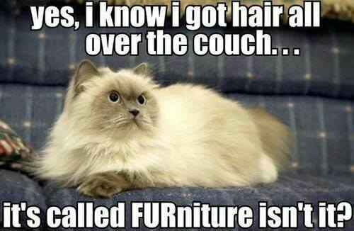 fur all over the furniture and carpets