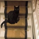 Coir Natural black border and matching Cat