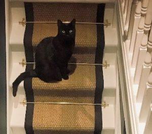 Coir Natural black border and matching Cat